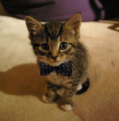 Mr. Purrfect does exist!
