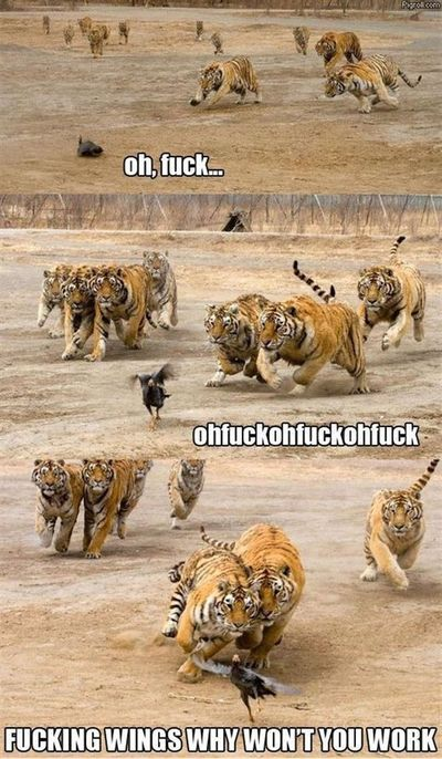 I hate the F word. but this is hilarious!!
