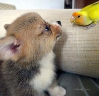 Fuzzy meets feathered.