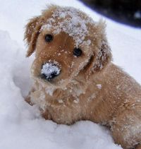 Snow buddy!