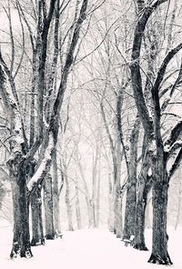 Chilly trees...
