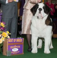 The Westminster Kennel Club | Photo