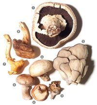 A visual guide to mushrooms