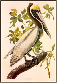 John James Audubon Painting 3.jpg