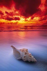 Shell Sunrise