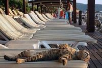 Man does this cat have the right idea!