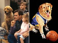 Buddy the Dog (Comet)...had more of a career than the twin boys...also, I teared up after reading he passed away.