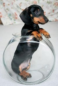 The cutest fish in the . . er, fishbowl!