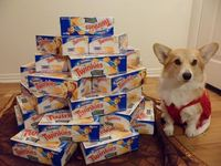 Corgis are stashing all available Twinkies!