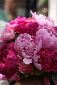 Hot pink or raspberry shades of peonies