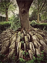 The Hardy Tree in the churchyard of St. Pancras Old Church in London, hundreds of old gravestones circle an ash tree. In the 1860's an older part of the churchyard was designated to make way for a new railway line. Coffins were removed with care and...