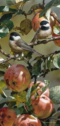 Carl Brenders Chickadee and Apple Tree