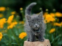 """""""Prowling his own quiet backyard, or asleep by the fire, he is but a whisker away from the wilds."""" --Jean Burden"""