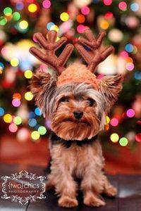 Awww reindeer dog!
