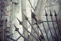#Symbiotic #Fence #Photography