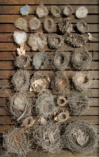 nests and more nests....