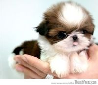 Little baby puppy...too cute for words!